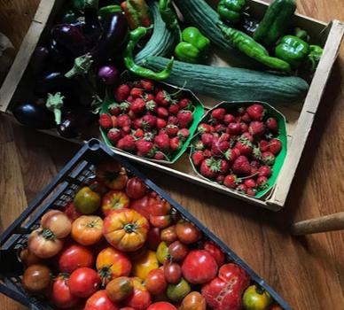 Simon et Nicolas, nos futurs producteurs de légumes ?